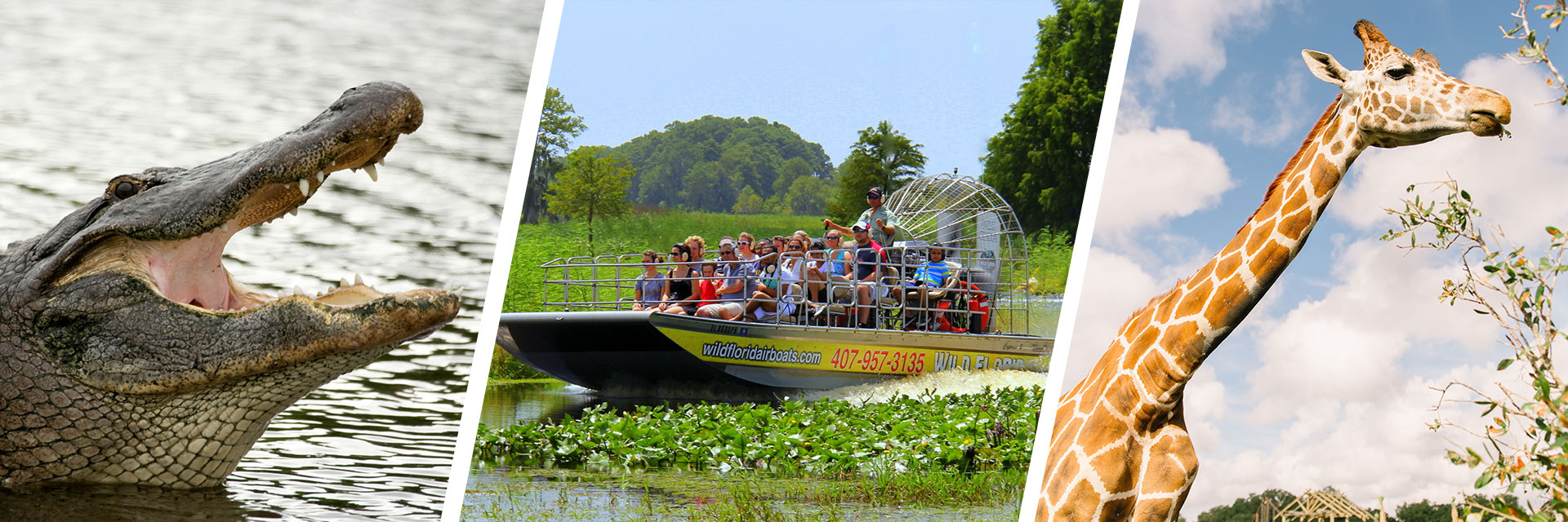 Wild Florida Everglades Wildlife Park Amp Airboat Rides