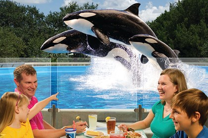 Dine with Orcas