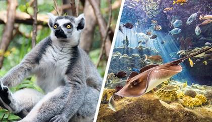 Tampa ZooQuarium