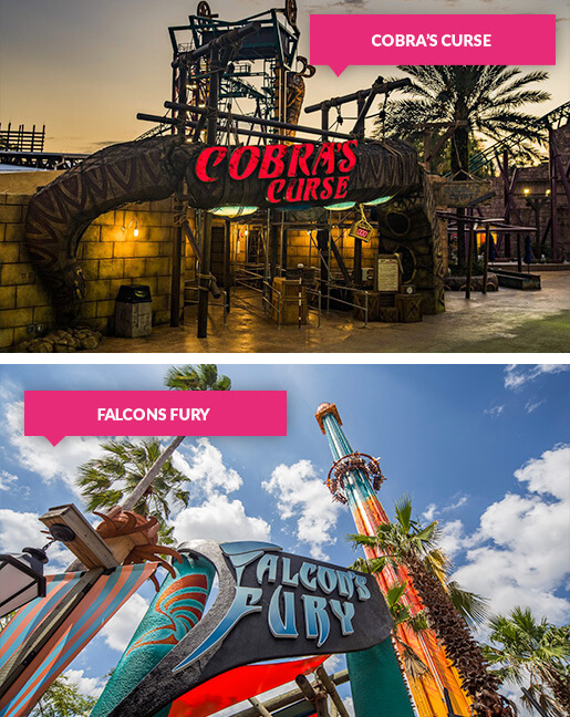 The Cobras Curse and Falcon Fury rides at Busch Gardens