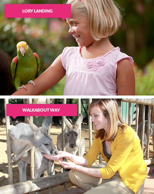Girl with parrot and woman feeding kangaroos at Busch Gardens