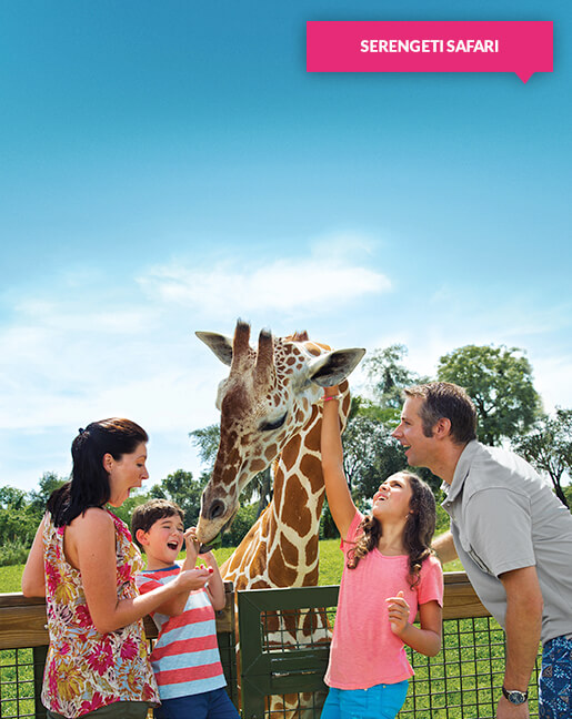 Family of four interacting with a giraffe at Busch Gardens