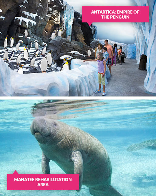 Penguins and manatees at SeaWorld Orlando
