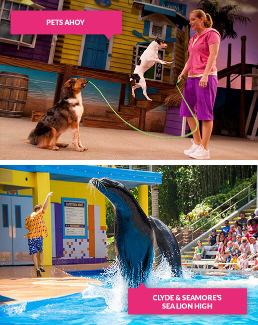 Pets Ahoy and Clyde and Seamore shows at SeaWorld