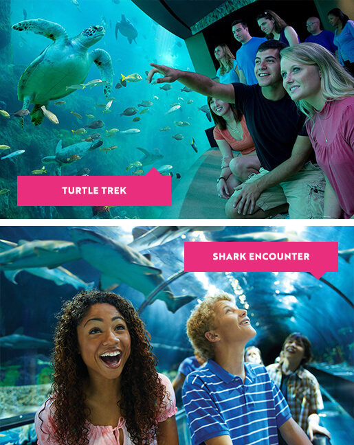 Turtle Trek and Shark Encounters at SeaWorld