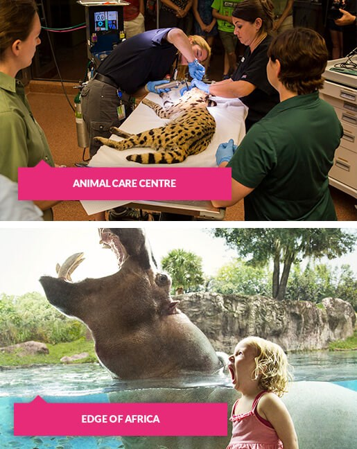 Animal Care centre and a girl with hippo