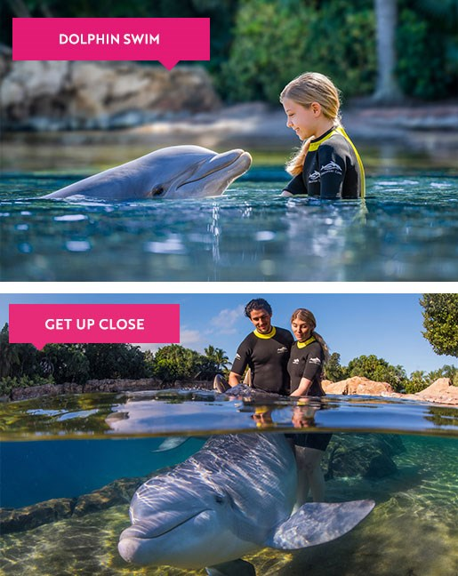 Families interacting with dolphins at Discovery Cove