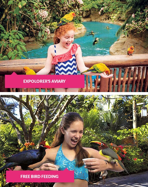 Up close with the birds at Discovery Cove