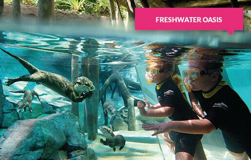 Otters and children at the Freshwater Oasis