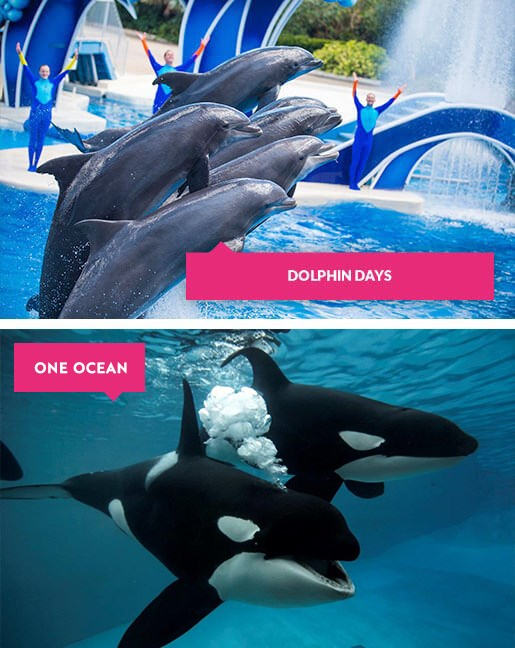 Dolphin and orca shows at SeaWorld Orlando